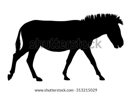 Vector illustration of zebra silhouette - stock vector
