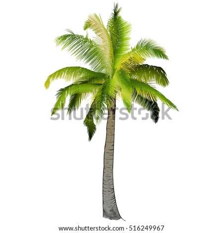 Branch and palm trees essay