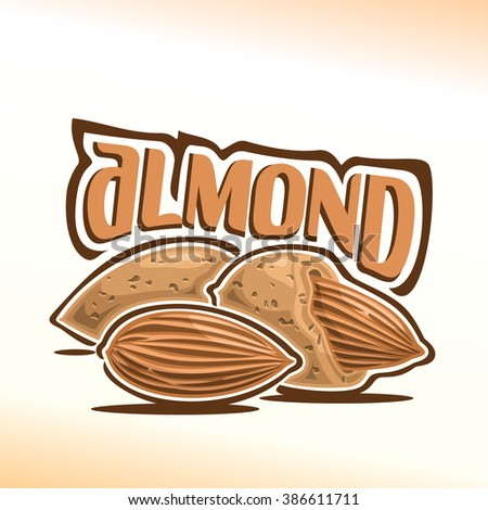 Vector illustration on the theme of the logo for almond nuts still life composition , consisting of peeled almond nutlet and two nuts in the nutshell