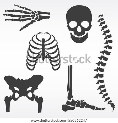 skeleton spine drawing wwwpixsharkcom images