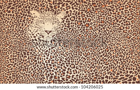 Vector illustration pattern background leopard skins and head - stock vector