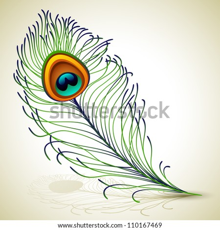 Vector illustration - peacock feather - stock vector