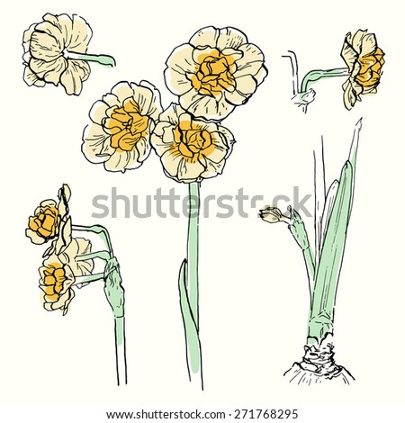 Vector illustration. Set of hand drawn sketches of narcissus bridal crown. Ink outlines with some colors isolated on ivory background - stock vector