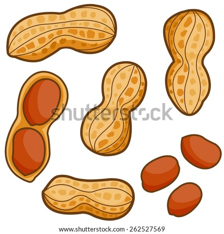 Vector illustration set of peanuts on white background.  - stock vector