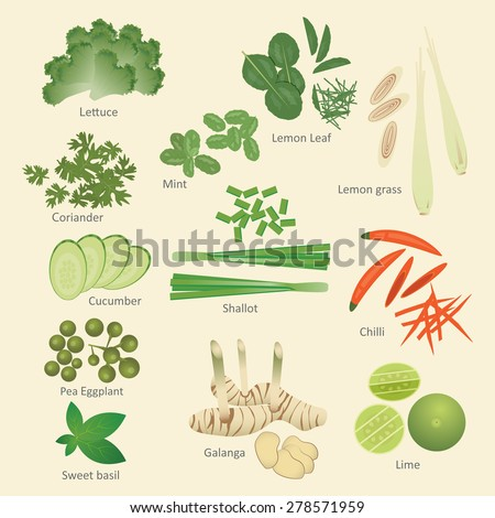 vector illustration set of Thai food ingredients, vegetable,herbs and Thai kitchens isolated - stock vector