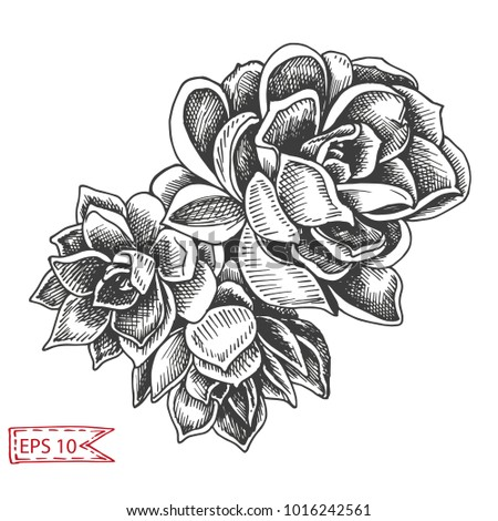 Vector illustration sketch - card with succulent flowers.