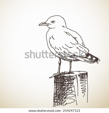 Vector Illustration Sketch of Seagull isolated - stock vector