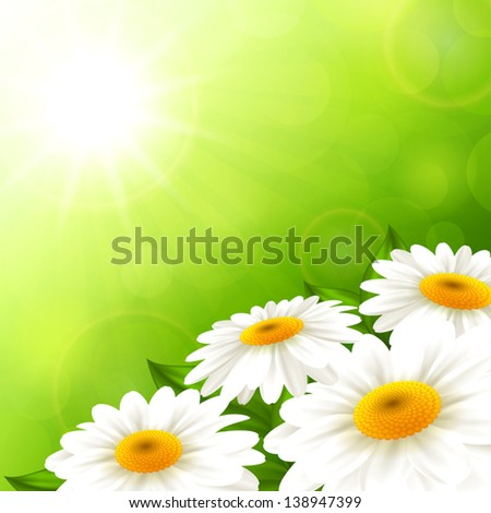 Vector illustration summer camomiles on a green background