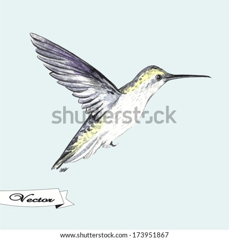 Vector illustration watercolor hummingbird illustration greeting vector illustration watercolor hummingbird illustration for greeting cards invitations and other printing and m4hsunfo