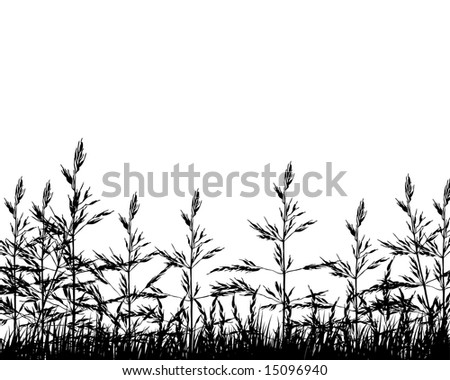 Vector illustration wheat background for design use - stock vector