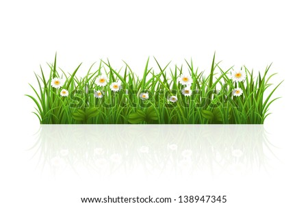 Vector illustration with a beautiful summer grass - stock vector