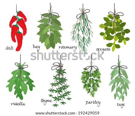 Vector illustration with eight different bunches of medicinal aromatic herbs with fresh red cayenne chilli peppers  bay  rosemary  oregano  rocket  thyme  parsley and sage on white with names - stock vector