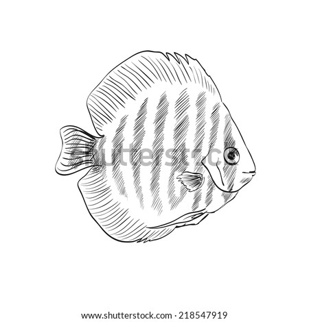Vector illustration with hand drawn realistic  fish.