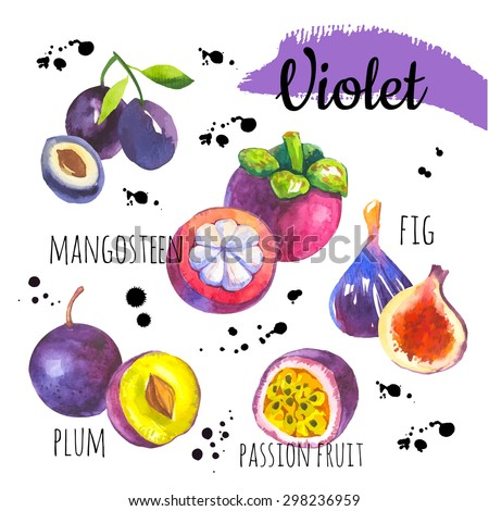 Vector illustration with watercolor food. Set of different fruits: fig, plum, mangosteen, passionfruit. Simple painting sketch in vector format. Violet set.