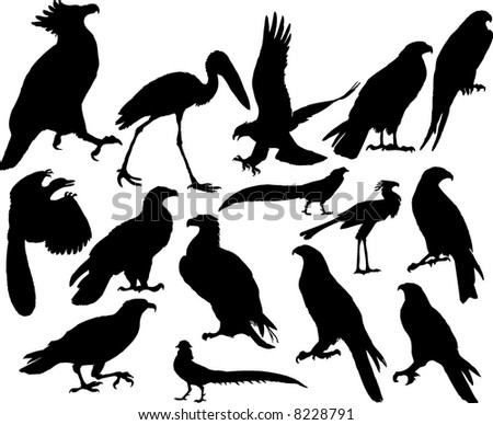 Vector illustrations black silhouettes birds on white - stock vector