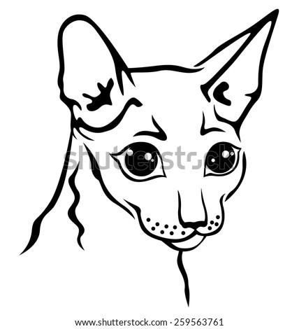 Vector illustrations of contour Cornish Rex cat muzzle - stock vector