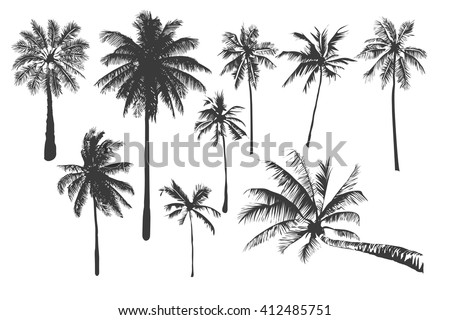Vector illustrations Set realistic black silhouettes isolated tropical palm trees on a white background - stock vector