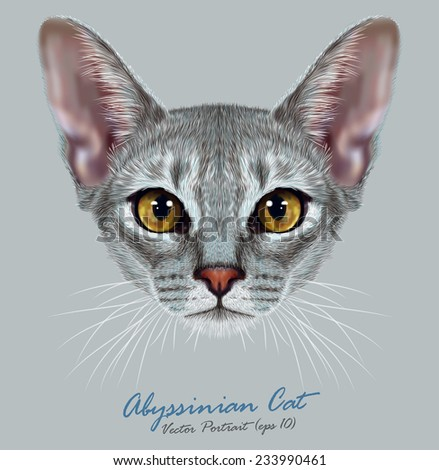 """Vector Illustrative Portrait of Abyssinian Cat. Cute breed of domestic short haired cat with a distinctive Blue """"ticked"""" tabby coat and with Yellow eyes. - stock vector"""