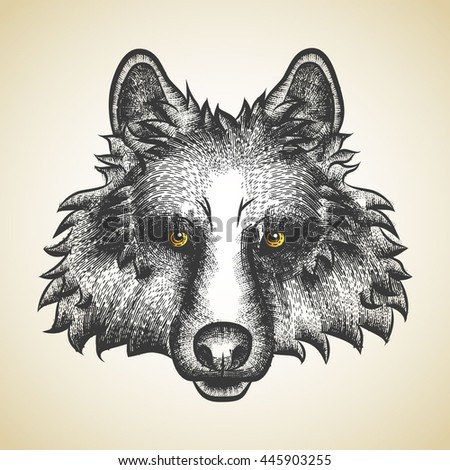 Vector Illustrative Portrait of Wolf. Wolf's head painted pen