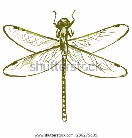Vector image of a dragonfly. Flying insects - stock vector