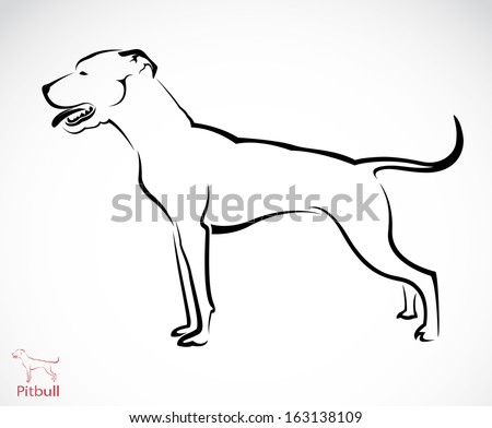 Vector image of a pit-bull dog on white background - stock vector