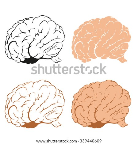 Vector image of brains in different   style - stock vector