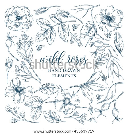 Vector ink graphic wild rose floral hand drawn elements collection with leaves and flowers. Decorative floral set for fabric, textile, wrapping paper, card, invitation, wallpaper, web design. - stock vector