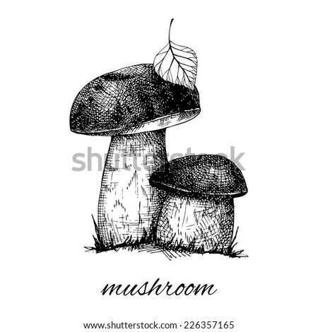 Vector  ink hand drawn mushrooms illustration. Vintage harvest illustration isolated on white background - stock vector