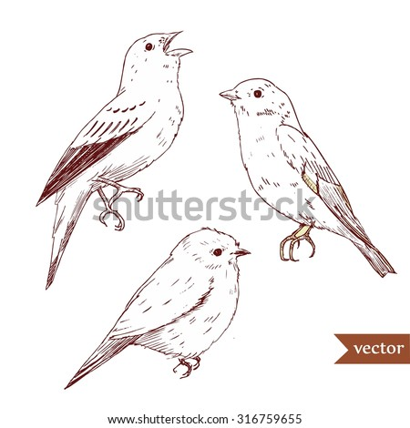 Popular Bird Drawing Stock Images Royalty-Free Images U0026 Vectors | Shutterstock
