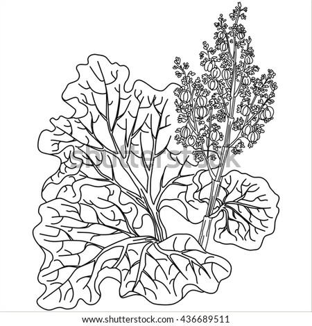 rhubarb coloring pages - photo#22