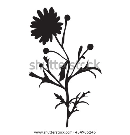 vector, isolated, silhouette of the field flower,one