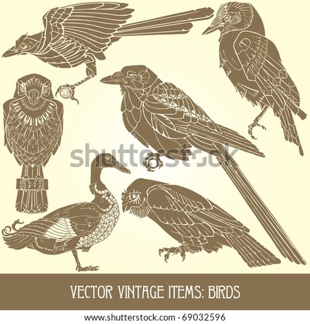 vector items: birds - variety of vintage bird illustrations - stock vector