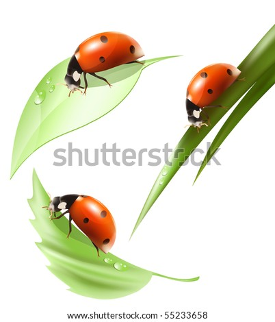Vector. Ladybird on leaf and grass with water drops. - stock vector