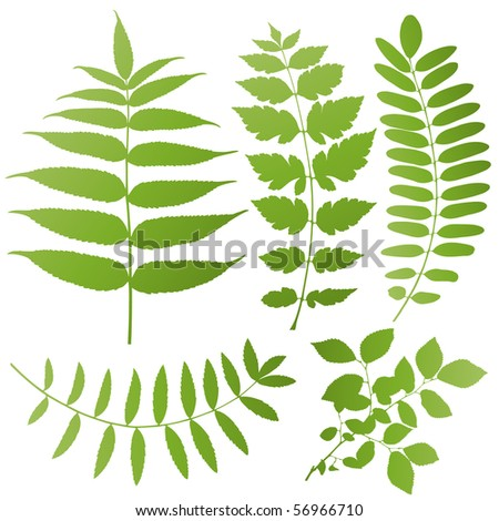 vector leaf shapes on white background