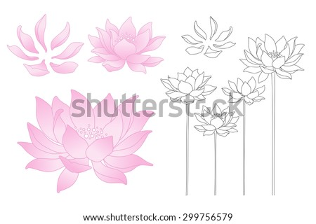 Vector lotus flowers and petals