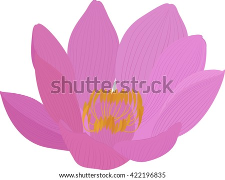 Vector lotus pink flower icon
