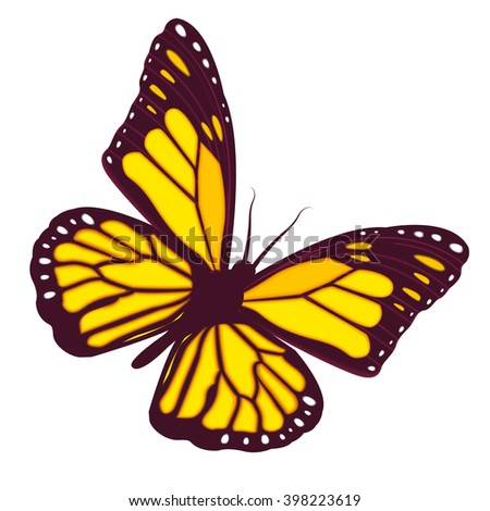 Vector monarch butterfly flying. Butterfly isolated on a white background. Tropical butterfly. Vector illustration - stock vector