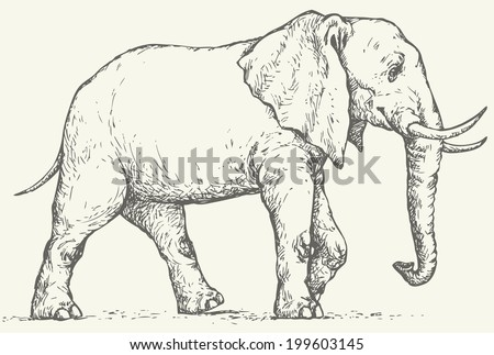 Vector monochrome drawing of a shading ink on paper. Big elephant walks through the wilderness - stock vector