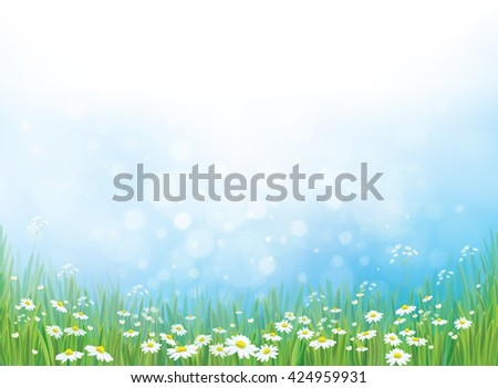 Vector nature background, white daisy flowers on blue bokeh background. - stock vector