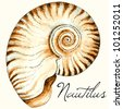 Vector nautilus sea shell design. Hand drawn watercolor and ink illustration in traditional style - stock vector