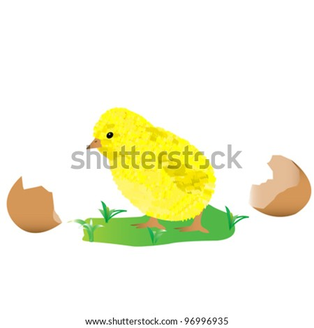 vector of little chick over white background - stock vector
