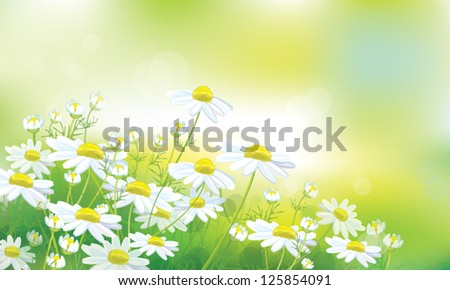 Vector of spring background with white daisies. - stock vector