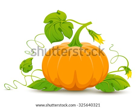 Vector orange pumpkin isolated on white background. - stock vector