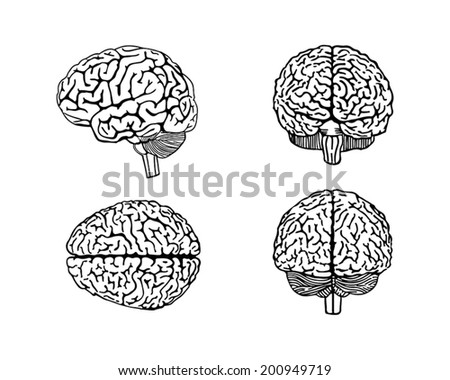 Vector outline illustration of human brain - stock vector