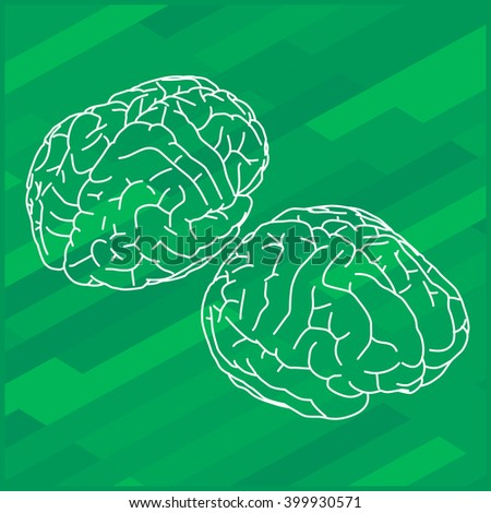 Vector outline illustration of human brain. Human brain isometric view.  - stock vector