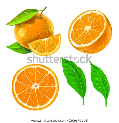 vector paint hand drawn picture of orange - stock vector