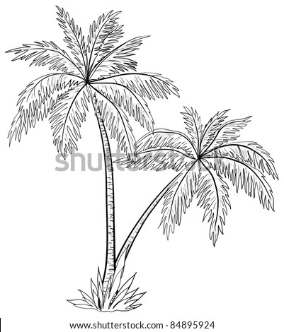 Vector, palm trees with leaves, monochrome contours on white background - stock vector