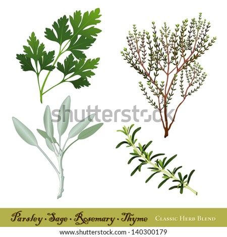 """vector - Parsley, Garden Sage, Rosemary and Thyme. Classic herb blend immortalized in traditional English ballad """"Scarborough Fair"""". See other herbs and spices in this series. EPS8 compatible. - stock vector"""