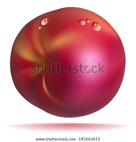 Vector photo realistic nectarine isolated on white background - stock vector