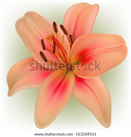 Vector photo realistic pink lily - stock vector